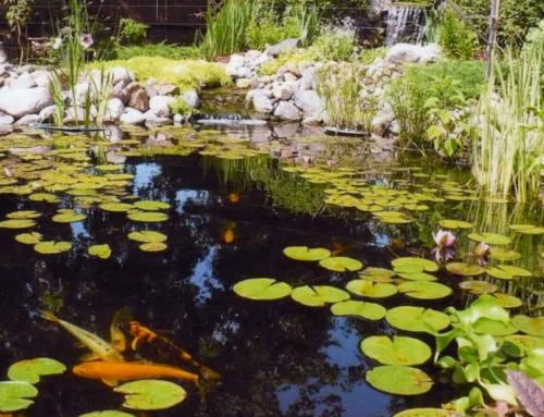 July 29 & 30 2017 MWGS Water Garden Tour